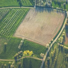 Biomassza mint energiaforrás