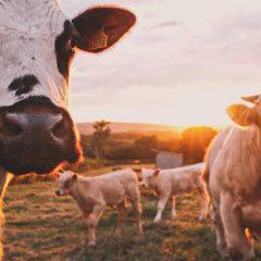 Példaértékű párbeszéd a hús termelők és a kereskedelmi láncok között